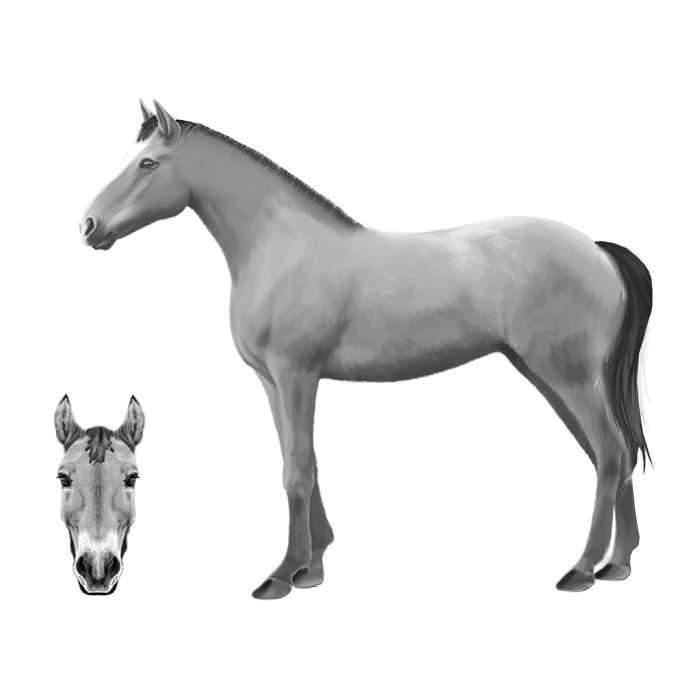 Configura il tuo cavallo